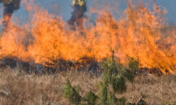 Сухи треви пламнаха