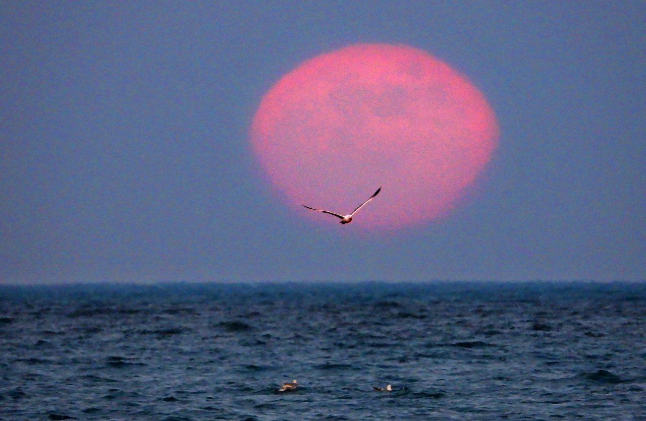 -луна-1280x835.jpg
